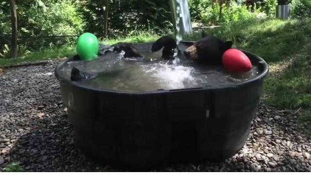 Vasche Da Bagno Nella Jacuzzi : Giovane uomo bello rilassante nella vasca uomo con barba che