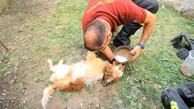 Cane disidratato salvato da vigili del fuoco e polizia a Pistoia