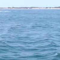 A Venezia c'è un delfino in laguna