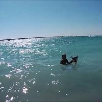 L'indio e il gabbiano: una favola di mare