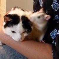 Sanremo, la sorprendente amicizia tra un gatto e un topo
