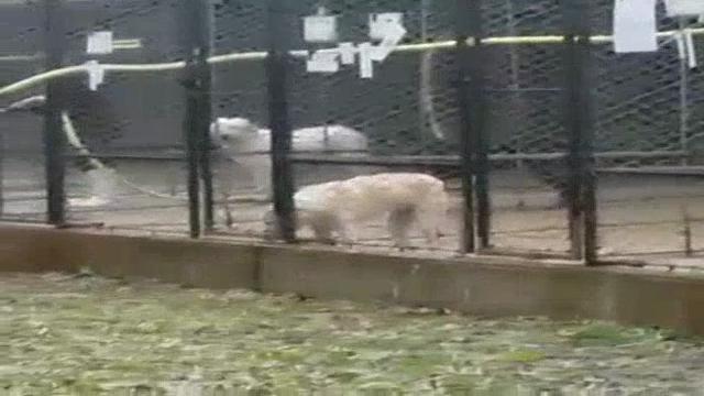 Bologna, acqua gelata sui cani per lavare i box