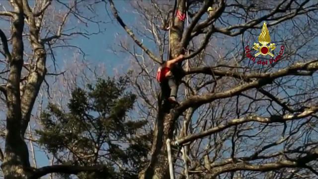 Precipita col parapendio e si incaglia sull'albero: salvato dai vigili del fuoco