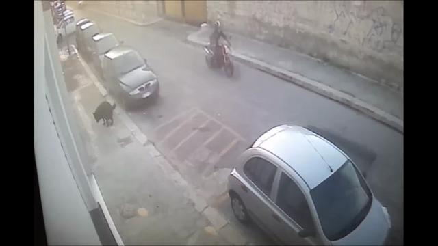 Bari, i vigili filmano il cane che sporca: 600 euro di multa al proprietario