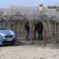 Caporalato, 6 arresti ad Andria per la morte di una bracciante nei campi
