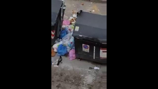 Roma, degrado alla Montagnola: uccelli e topi che rovistano nell'immondizia