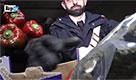 Marijuana tra i peperoni dalla Spagna, maxi blitz a Milano: 14 arresti