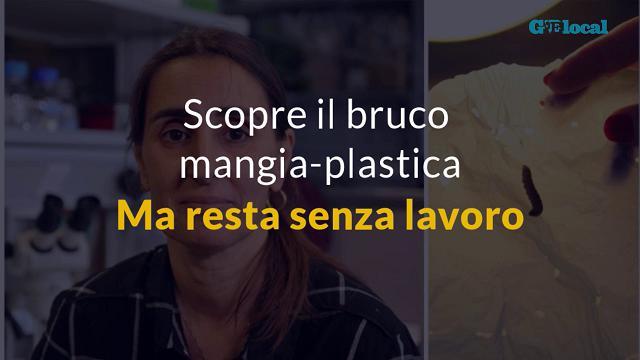Scopre il bruco mangia-plastica, ma resta senza lavoro