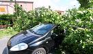 Forti raffiche di vento, un albero schiaccia un'auto