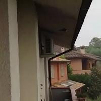 Treggiaia, torna la pioggia: il volo caotico delle rondini sembra una festa