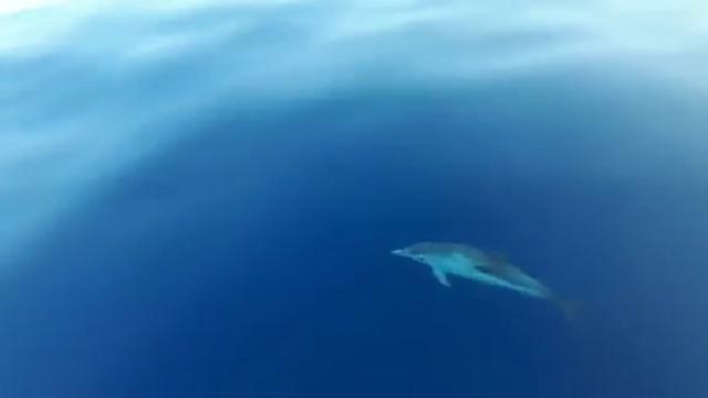 I delfini danzano intorno alla barca dello skipper bolzanino