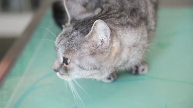 Bolzano: morta in casa da 30 giorni, ma prima ha salvato i gatti