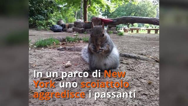 New York, scoiattolo incubo dei passanti: a Brooklyn aggredite 5 persone