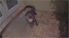 Florida, poliziotto cattura alligatore di fronte a un'abitazione: la lotta in soggettiva