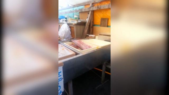 Giappone, il trancio di pesce salta sul bancone: c'è una spiegazione scientifica