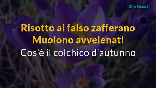 Risotto al falso zafferano: muoiono avvelenati. Cos'è il colchico d'autunno