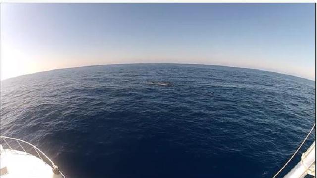 Capodoglio di dieci metri dà spettacolo nel mare del Cilento