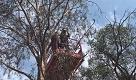 Australia, la koala scappa in cerca di un amico: salvata dai pompieri