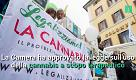 Come funziona la legge sulla cannabis terapeutica approvata alla Camera