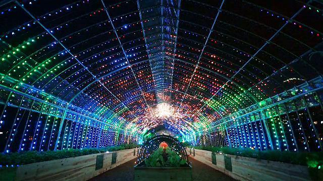 Piante, musica e luci: la serra psichedelica di Tokyo