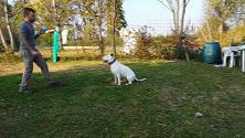"""Il cane Sid Innocente ma ancora in gabbia. La custode del canile: """"Non è pericoloso"""""""