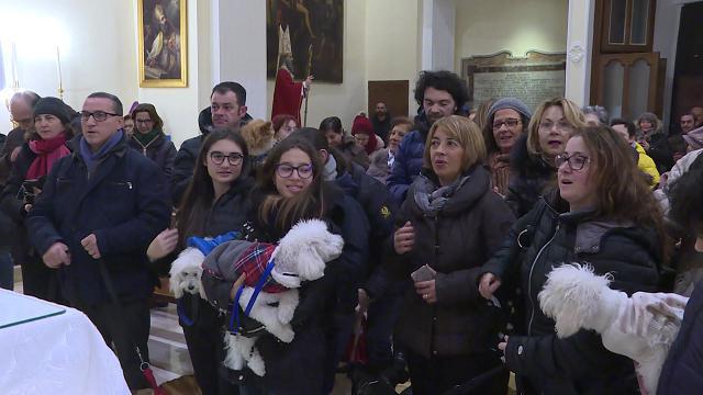 Bari, cani, gatti e un coniglio in chiesa: la benedizione degli animali per sant'Antonio Abate