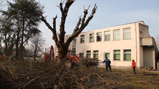 Robbio, piante abbattute nel cortile delle scuole
