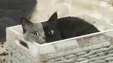 Francia, ecco Narnia: il gatto bicolore star dei social