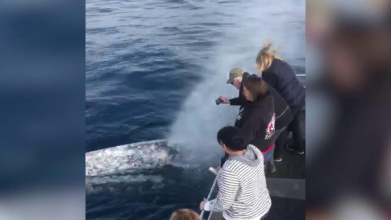 Vasca Da Bagno Balenottera : California gita in barca con bagno la balena si diverte a
