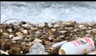 """A Bari i 'pirati della plastica' ripuliscono la spiaggia: """"Il mare è in pericolo"""""""