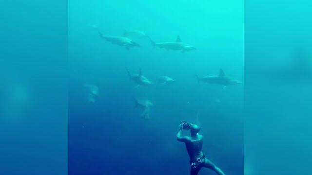 Galapagos, l'incontro con gli squali martello è da brivido