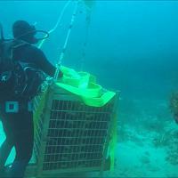 Alghero, la cantina sotto il mare: lo spumante invecchia a 40 metri di profondità