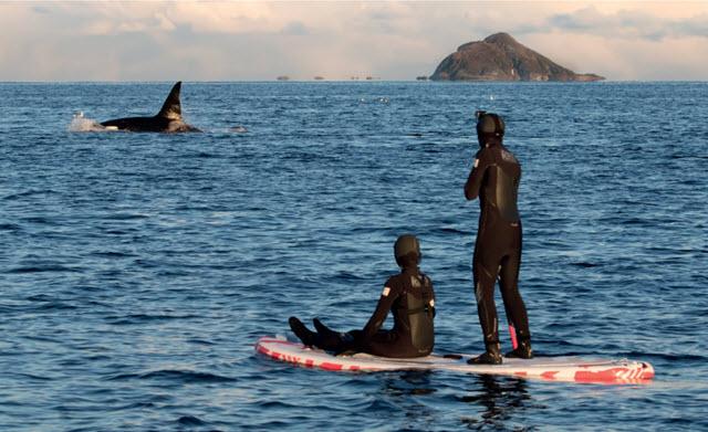 Il mare alle donne, la danza con le orche di Kari Schibevaag