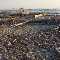 Tronchi e farmaci invadono la spiaggia di Marina di Vecchiano