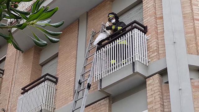 Gabbiano intrappolato in un terrazzo a Grado: liberato tra gli applausi
