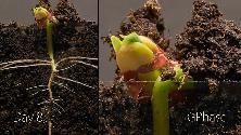 La magia della vita: ecco cosa succede a un seme sottoterra