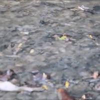 Scarichi abusivi, la moria di pesci nel Teva a Valdobbiadene