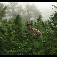 Piantagione di marijuana nelle campagne di Ollolai: per scoprirla è servito l'elicottero