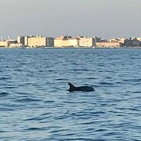 Livorno, delfini al largo dell'Accademia: il video di un lettore