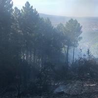 Incendio monte Serra: il bosco incenerito nella zona di Vicopisano