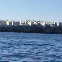 Polignano a Mare, la danza dei delfini vicino alla costa: la sorpresa dei turisti