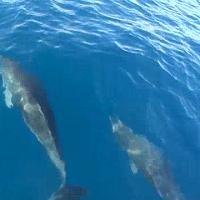 Navigando in compagnia dei delfini nel mare di Livorno