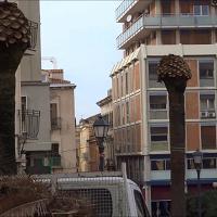 Sassari, il punteruolo rosso fa strage di palme in piazza Castello
