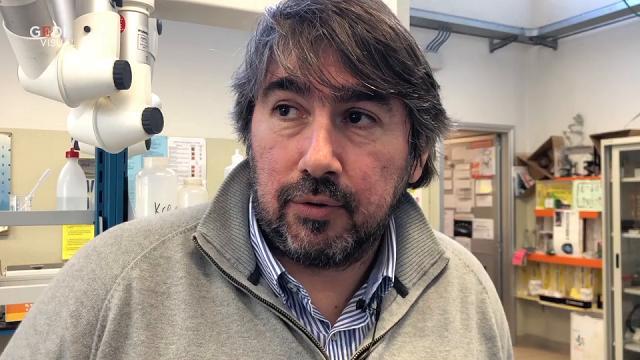 All'Itis Fermi di Mantova progettata la bioplastica SweetPaper