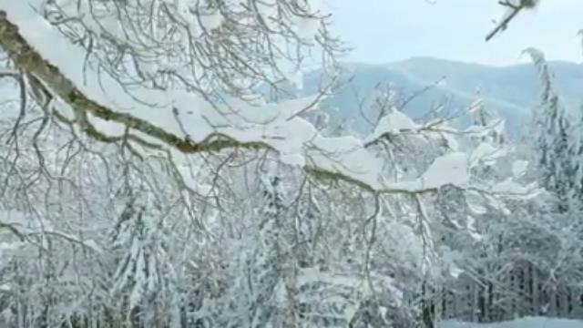 Al cinema Lumiere di Bologna una serata dedicata alla bellezza delle Foreste casentinesi