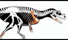 Com'era il Saltriovenator zanellai, il più antico dei grandi predatori