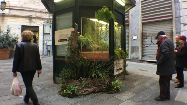 Genova, via Luccoli, il chiosco abbandonato diventa un vivaio