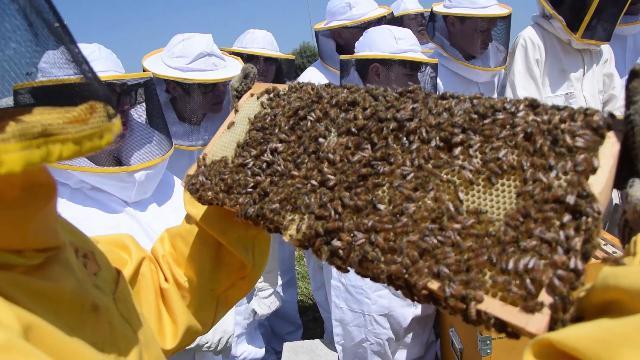 Imparare dalle api, a Bari l'alveare è didattico: incontri ravvicinati e giochi per capire la natura