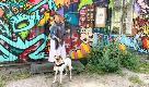 Un cane in camper: in viaggio con Renato - 2. Copenaghen