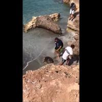 """Cabras, liberata la tartaruga """"Barracuda"""" dopo mesi di cure"""